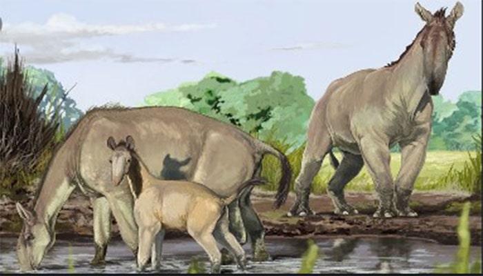 دست غالب در پستانداران