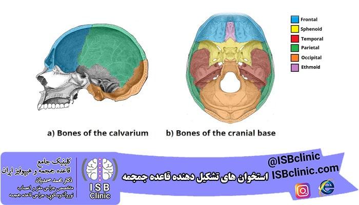 استخوان های تشکیل دهنده قاعده جمجمه